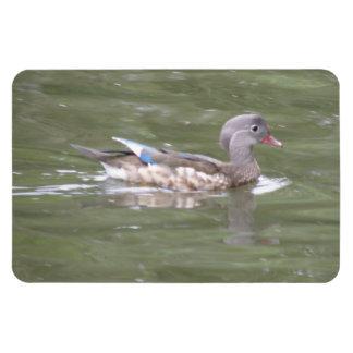 Duck on the Lake Premium Magnet