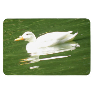 Duck on the Water Premium Magnet