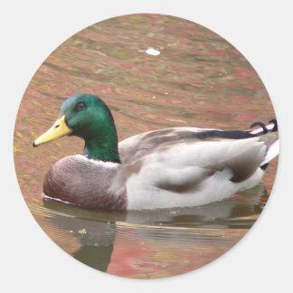 Duck or Decoy Classic Round Sticker