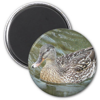 Duck Paddling 2 Inch Round Magnet