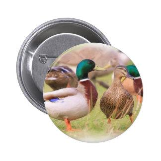 Duck Pinback Button