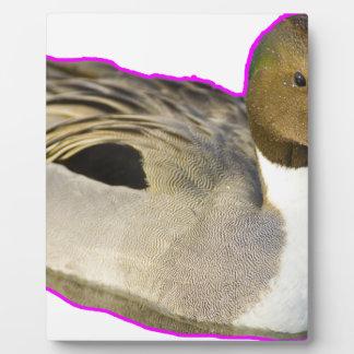 Duck Display Plaques