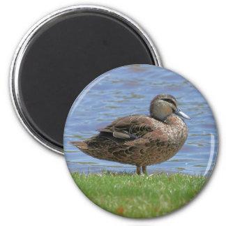 Duck Pond 2 Inch Round Magnet