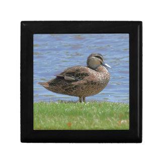 Duck Pond Gift Box