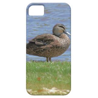 Duck Pond iPhone SE/5/5s Case