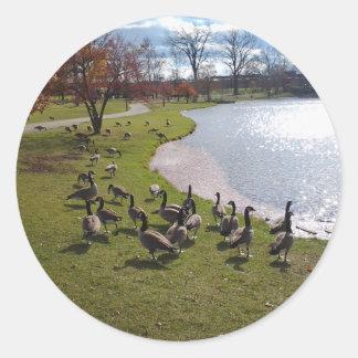 Duck Pond.jpg Classic Round Sticker