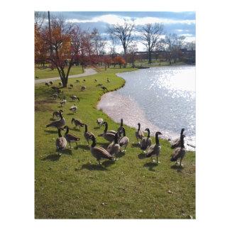 Duck Pond.jpg Letterhead