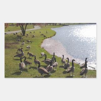 Duck Pond.jpg Rectangular Sticker