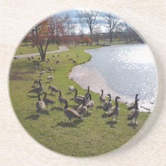Duck Pond.jpg Sandstone Coaster