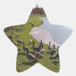 Duck Pond.jpg Star Sticker