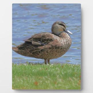 Duck Pond Plaque