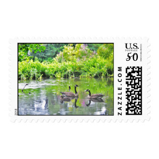 DUCK POND POSTAGE