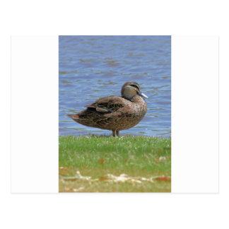 Duck Pond Postcard
