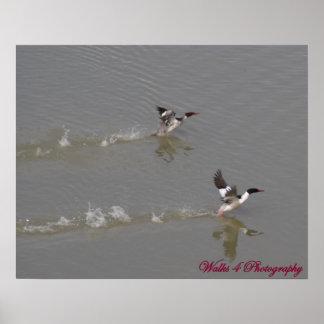 Duck Pond Print