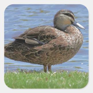 Duck Pond Square Sticker
