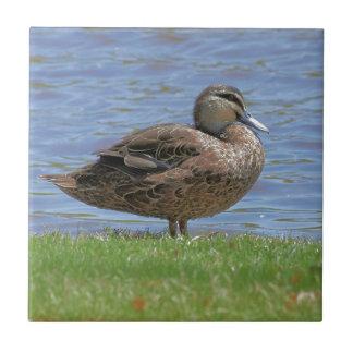Duck Pond Tile