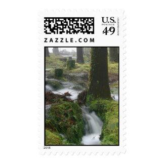Duck Pond Torrent Postage Stamp