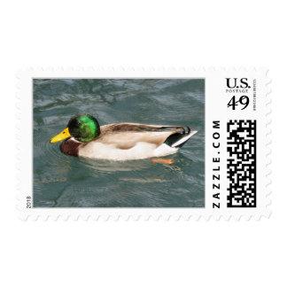 Duck Postage