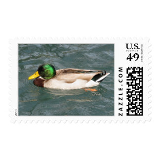 Duck Postage Stamp