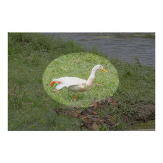 Duck practices yoga and ballet positions poster