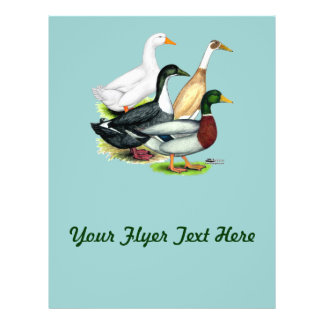 Duck Quartet Flyer
