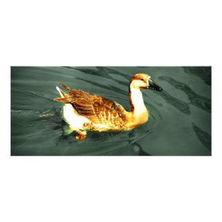 Duck Rack Card