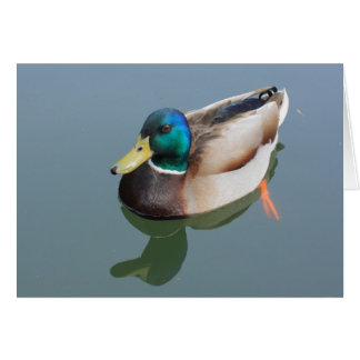 duck reflected by the water card
