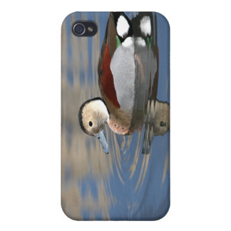 Duck, ringed teal beautiful photo iphone 4 case
