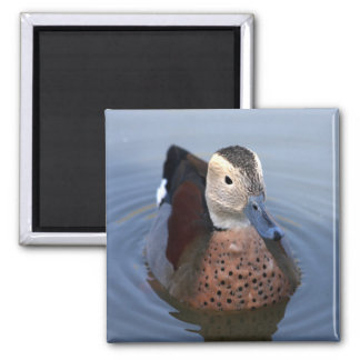 Duck ringed teal bird beautiful photo magnet