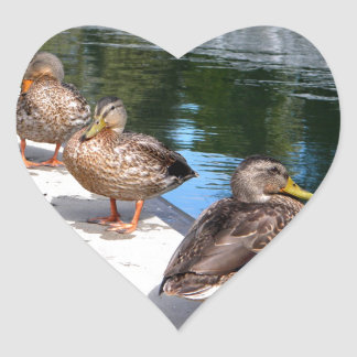 Duck Row Heart Sticker