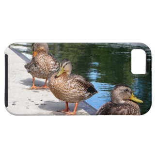 Duck Row iPhone SE/5/5s Case