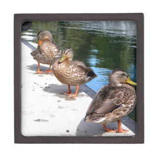 Duck Row Keepsake Box