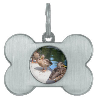 Duck Row Pet Name Tag