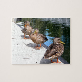 Duck Row Puzzles