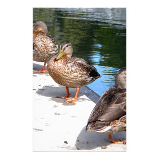 Duck Row Stationery