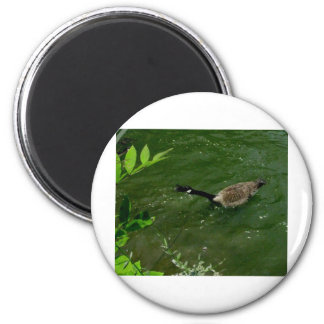 Duck that has lots to say 2 inch round magnet