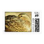 Duck Tuck Postage Stamp