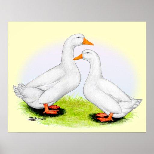 Duck:  White Pekins Poster
