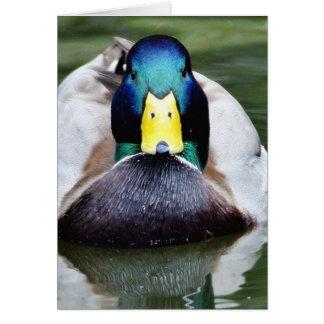 Duck Wild Animal Card