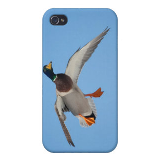 Duck with Cupped Wings iPhone 4/4S Covers