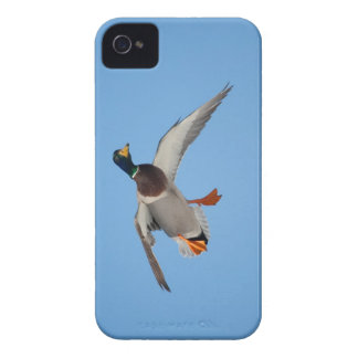 Duck with Cupped Wings iPhone 4 Case-Mate Cases