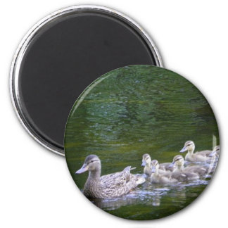 Duck with Ducklings 2 Inch Round Magnet