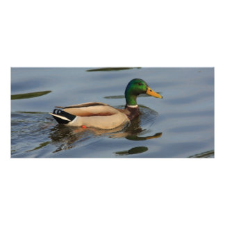 duck with water drops rack card template