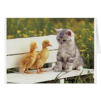 Duckheap y gatito de la entrevista del amigo tarjeta
