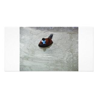 Ducking Around Photo Card