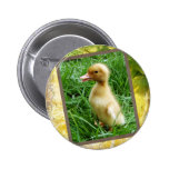 Ducking in the Grass Pins