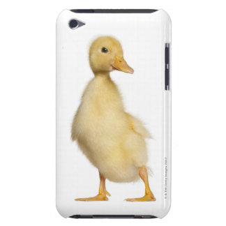 Duckling (1 week old) iPod touch cases