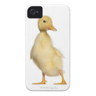 Duckling (1 week old) iPhone 4 cover