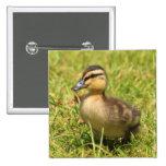 Duckling 2 Inch Square Button