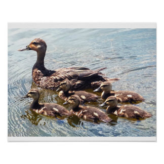 Duckling and Mother Duck Artwork Posters